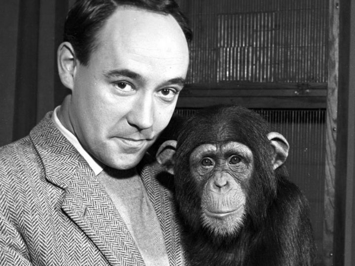Mandatory Credit: Photo by ITV / Rex Features ( 656661a ) 'Zoo Time' 1961, Desmond Morris ITV Archive